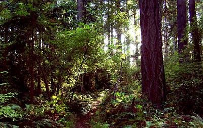 Photograph - Hidden Arbor by Peri Craig