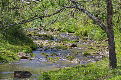 Grass Rocks Photograph - Hidden Creek by Betsy Knapp