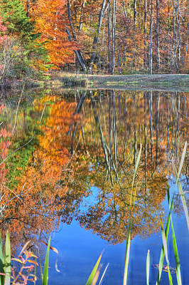 Photograph - Hidden Pond by JC Findley