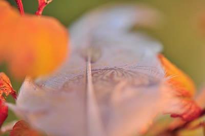 Photograph - Hidden Secret   by Puzzles Shum