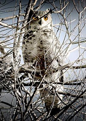 Photograph - Hiding In Plain Sight by Ellen Heaverlo