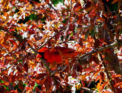 Photograph - Hiding In Plain Sight by Judy Wanamaker