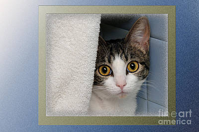 Cats Photograph - Hiding Spot by Andee Design
