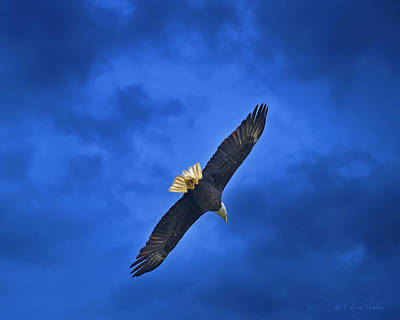 Digital Art - High And Lifted Up Bald Eagle by J Larry Walker