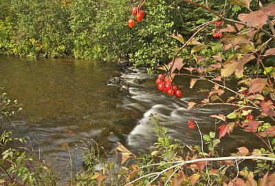 Viburnum Photograph - High Bush Cranberry 7823 by Michael Peychich