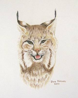 Canadian Lynx Drawing - High Country Shadow by Bud  Barnes