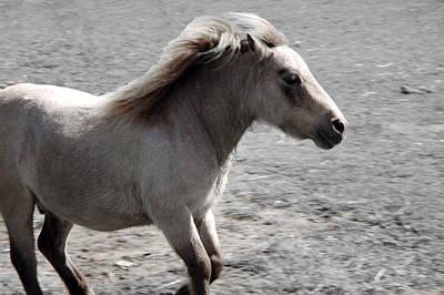 Pony Photograph - High Spirited Pony by LeeAnn McLaneGoetz McLaneGoetzStudioLLCcom