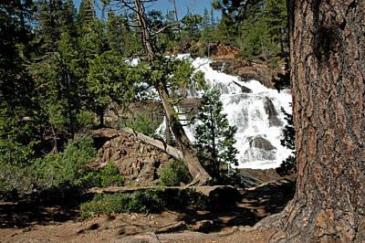 Moody Trees - Hikers Dream Glen Alpine Falls by LeeAnn McLaneGoetz McLaneGoetzStudioLLCcom