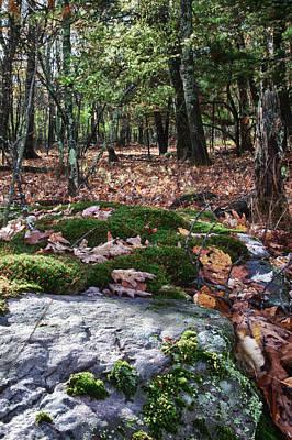 Photograph - Hiking Trail Near Mountain Lake by James Woody