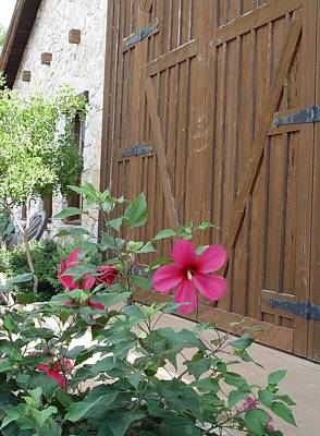 Art Print featuring the photograph Hill Country Hibiscus by Elizabeth Sullivan