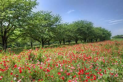 Hill Where A Poppy Bloom Art Print by Tad Kanazaki
