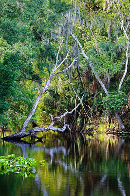 Photograph - Hillsborough River At Morris Bridge Wilderness Park by Ed Gleichman