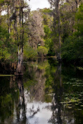 Art Print featuring the photograph Hillsborough River In March by Steven Sparks