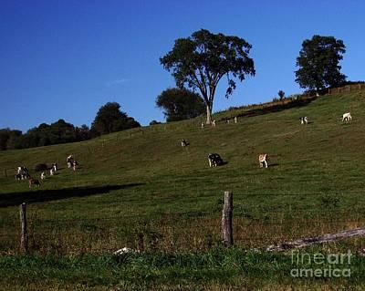 Photograph - Hillside Grazing by Donna Cavanaugh