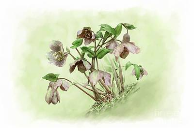 Painting - Hillside Hellebores by Artellus Artworks