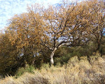 Photograph - Hillside Tree Photograph by Kristen Fox