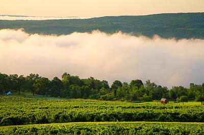 Pastoral Vineyard Photograph - Hillside Vineyard II by Steven Ainsworth