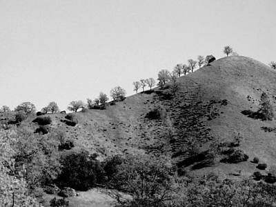 Photograph - Hilltop In A Row - Black And White by Kathleen Grace