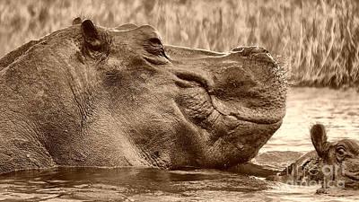 Photograph - Hippo Bull by Mareko Marciniak