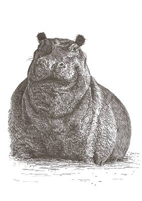 Pat Cross Drawing - Hippo Smile by Pat Barker
