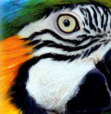 His Watchful Eye Print by Karen Wiles