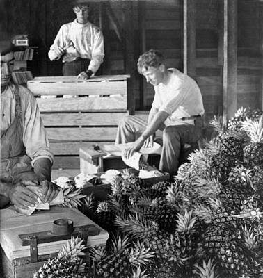 Historic Pineapple Factory - Florida - C 1906 Art Print by International  Images