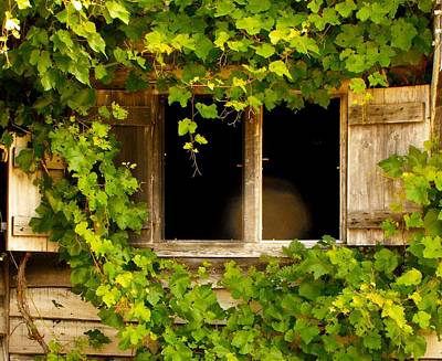Photograph - History A View From The Vines by William OBrien
