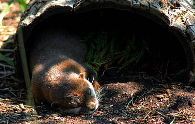 Photograph - Hit The Otter Snooze by LeeAnn McLaneGoetz McLaneGoetzStudioLLCcom