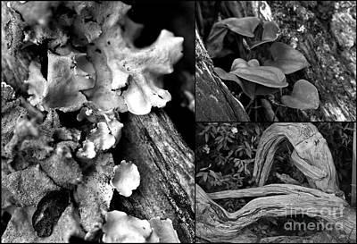 Photograph - Hodges Blak And White Triptychs by Ken Frischkorn