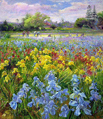 Flower Fields Painting - Hoeing Team And Iris Fields by Timothy Easton