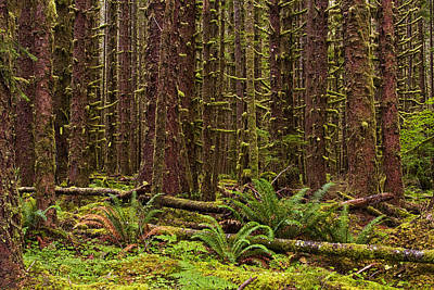 Forrest Photograph - Hoh Rainforest by Mark Kiver