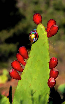 Photograph - Holiday Cactus 3 by Lou  Novick