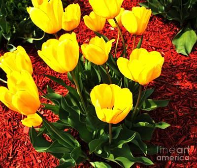 Dozen Photograph - Holland Tulips by Marsha Heiken