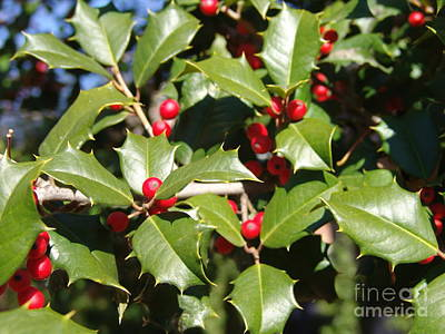 Photograph - Holly 3 by Rod Ismay