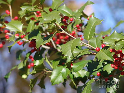 Photograph - Holly 4 by Rod Ismay