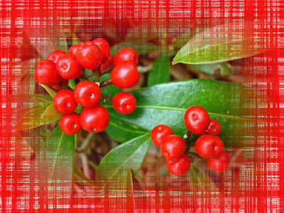 Holly Berries Art Print by Mother Nature