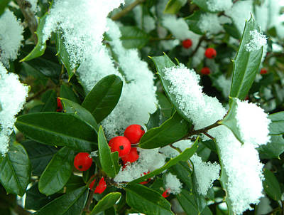 Holly In Snow Art Print by Sandi OReilly
