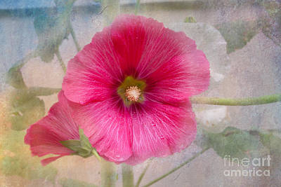Photograph - Hollyhock by Lena Auxier