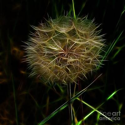 Photograph - Home Of The Dandelion Wishes by Denise Oldridge
