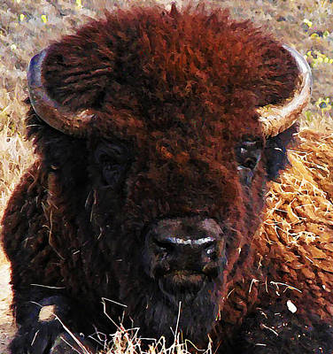 Bison Digital Art - Home On The Range by Bill Cannon