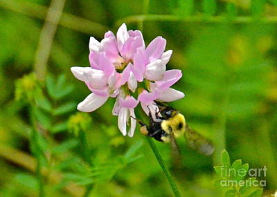 Photograph - Honey Bee by Carol  Bradley