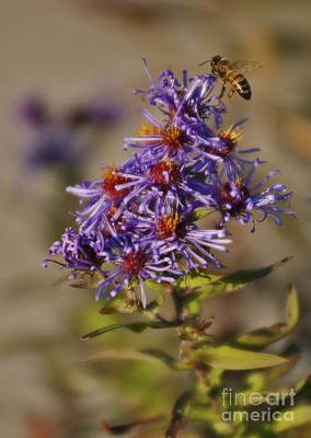 Photograph - Honey Bee by JT Lewis