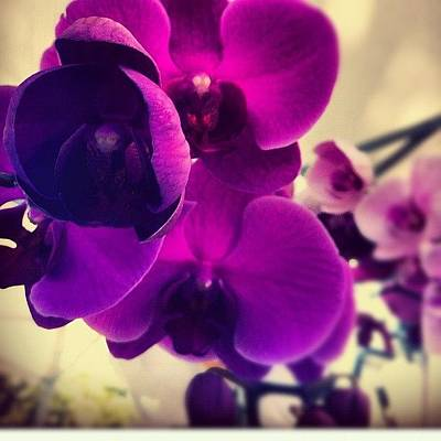Orchids Photograph - Honey Boo Boo #orchid #orchids by Kiki Bird
