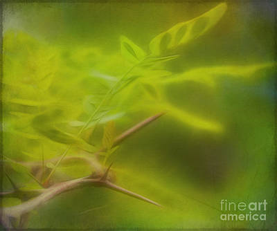 Photograph - Honey Locust by Judi Bagwell