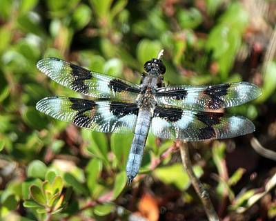 Photograph - Honeyman Park Dragonfly by Chris Anderson