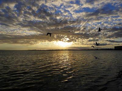 Photograph - Honeymoon Island Sunset by Judy Wanamaker