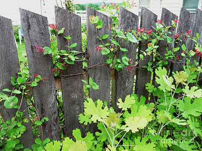 Photograph - Honeysuckle Fencepost by Margie Avellino