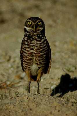 Photograph - Hoo Are You? by David Weeks