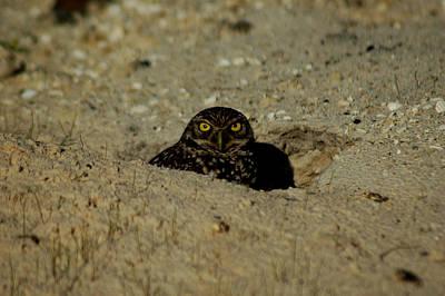 Photograph - Hoo Sent You? by David Weeks