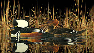 Digital Art - Hooded Meganser Ducks by Walter Colvin